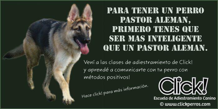 adiestramiento canino pastor aleman, educar a mi perro