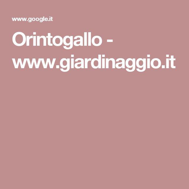 Orintogallo - www.giardinaggio.it