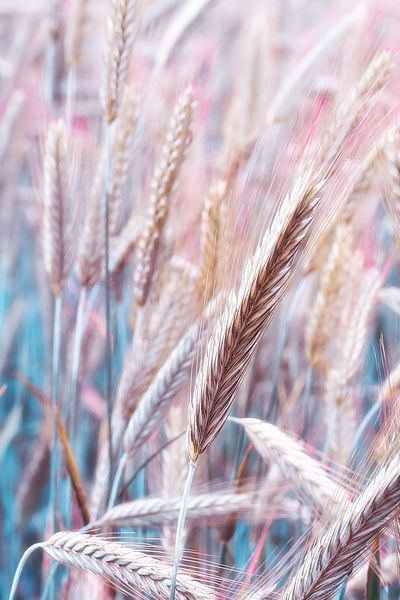 Nature in pastel colours by Birgit H.
