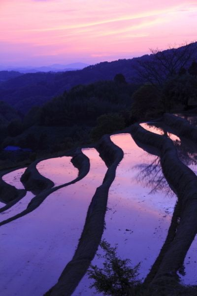 Rice field | image by Hiroshi Oka