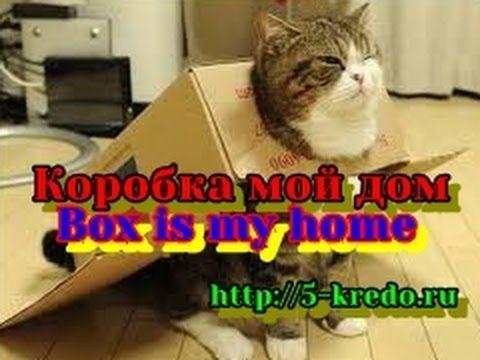 Коробка мой дом