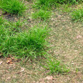 This page contains homemade lawn fertilizer recipes. Do you have an unhealthy patchy lawn? Making your own lawn fertilizer provides you with the opportunity to go as organic as you like. There are a myriad of fertilizer recipes to choose from many containing household products.