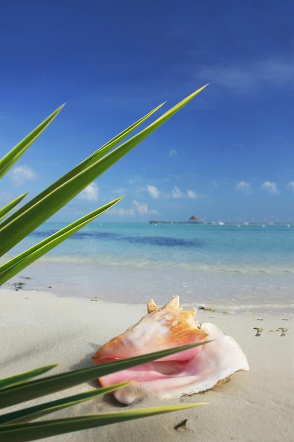 Avoya Travel Twitter: Conch Shell on the Beach in Mexico