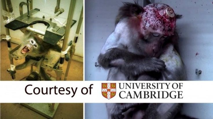 Ask Cambridge University to stop inhumane animal testing in the name of science!