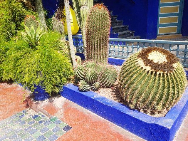 My amazing trip in Marrakech - Majorelle Garden