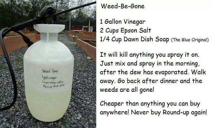 Home made weed killer!