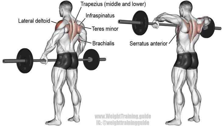 Best ideas about barbell row on pinterest