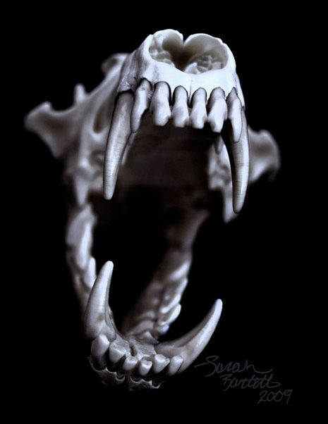 Black And White Animal Skull Photography