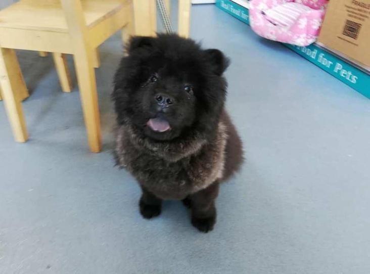 Damon Find A Pet Rspca Org Uk Unusual Dog Breeds
