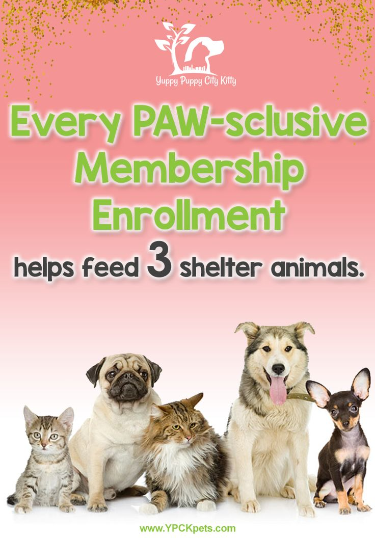 Pin By Ypck Pets On Learn About Yuppy Puppy City Kitty Cat City Animal Shelter Puppies
