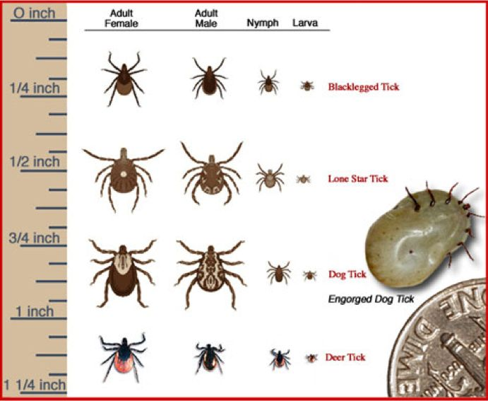 How To Get Rid Of Ticks Outside Naturally