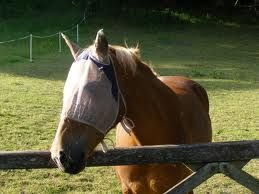 Homemade Fly Spray Recipes for Horses I always feel sorry for the horses with flies all over their eyes