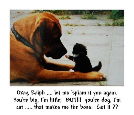 :))): Like A Boss, Friends, Pet, Dogs Cat, Puppys, Adorable, Kittens, Kitty, Big Dogs