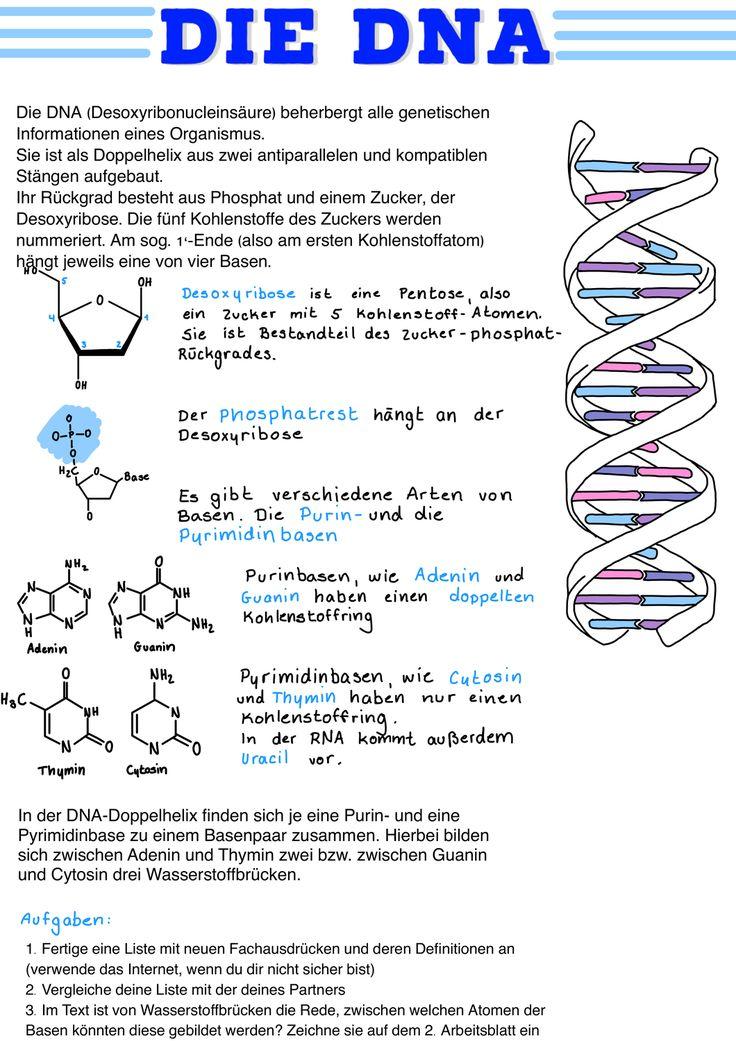 motivation themeneinstieg genetik die dna schule die dna
