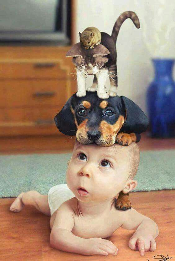 Картинках заработать, смешная картинка про животных и детей