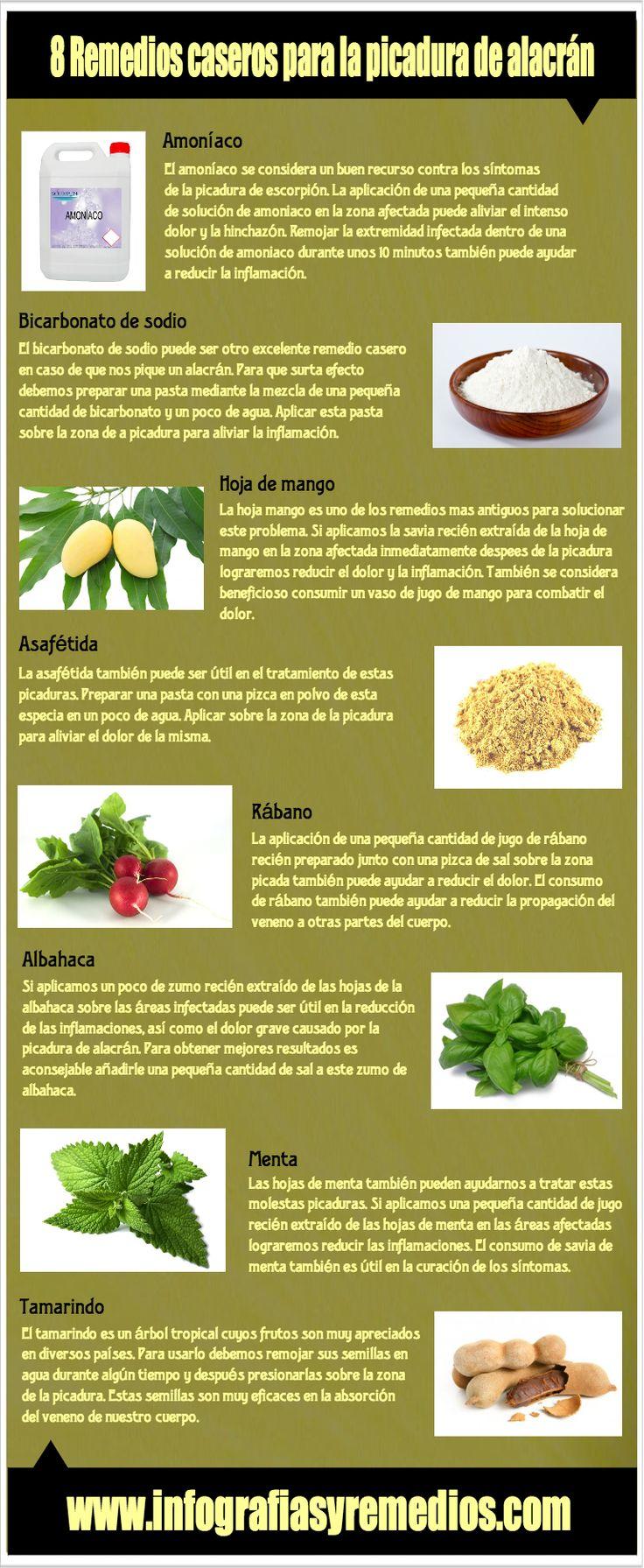remedios para la picadura de alacrán