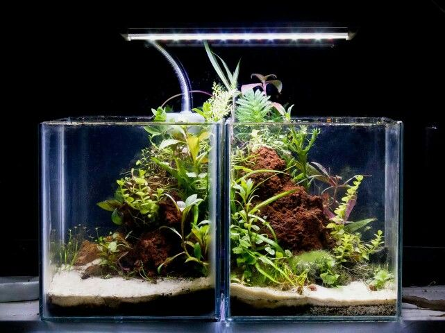 73 best images about nano tanks on pinterest 5 month for Split fish tank