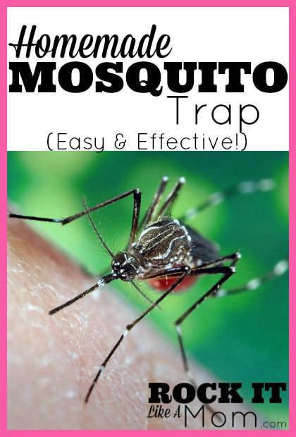 This homemade mosquito trap has never failed us! It's so easy to set up, and seriously effective!