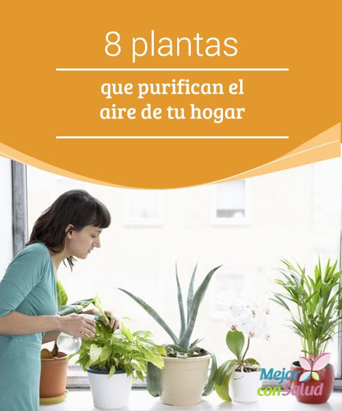 Best 25 plantas purificadoras de aire ideas on pinterest - Plantas de aire ...