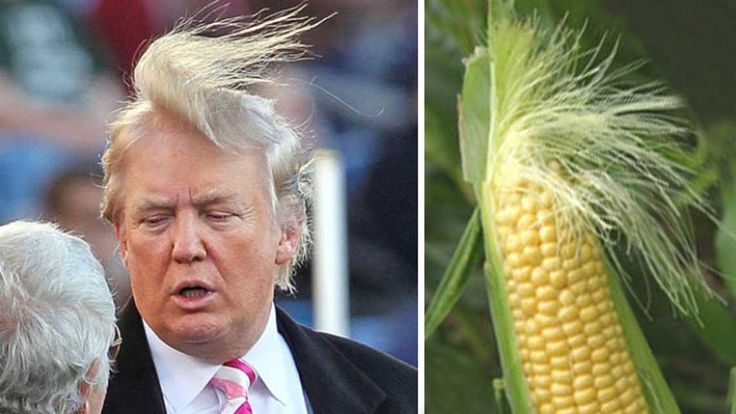19 Things That Look Just Like Donald Trump's Famous Hairdo -         The secret behind Donald Trump's famous combover has eluded us for years now. Is it natural, a toupee, or transplants? The world may never kno...