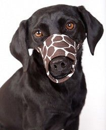 Okay, how about a pattern for a dog muzzle? - Patterns and