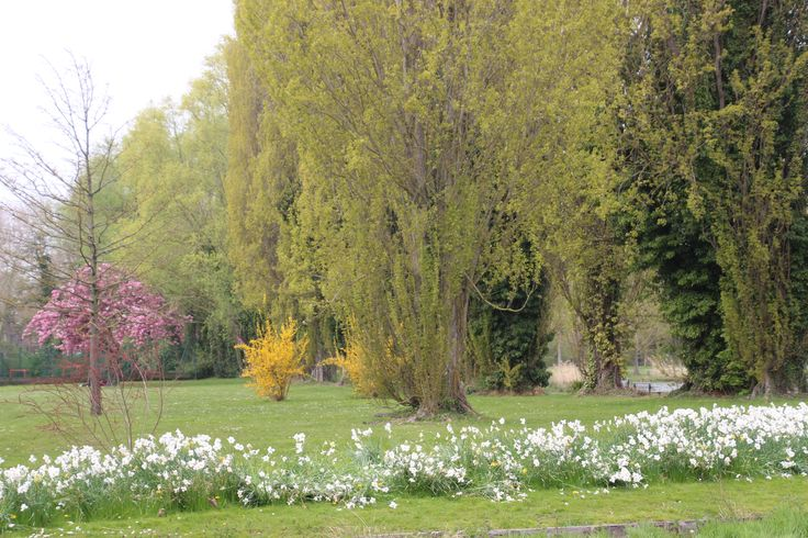 Beautiful parklands....flowers squished by dogs having fun. Amiens, France