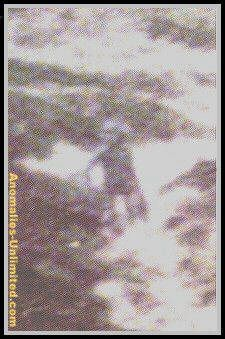 Alan Godfrey's 1980 alien encounter. This photo was taken on Ilkley moor, Godfrey had had other abduction and unexplained experiences, but this time he managed to get a photo.