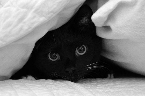 Black cats are so cute.