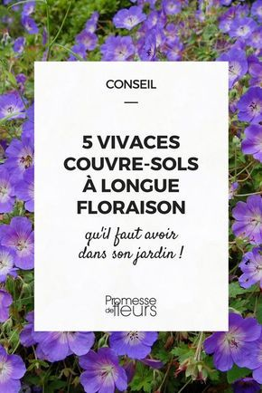 Quelles sont les 5 meilleures vivaces couvre-sol qui fleurissent tout l'été? Découvrez notre sélection pour une floraison ultra longue durée
