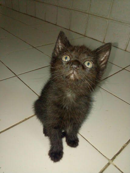 2 süße Main Coon kitten abzugeben - http://www.tier-kleinanzeigen.com/ads/2-suesse-main-coon-kitten-abzugeben/