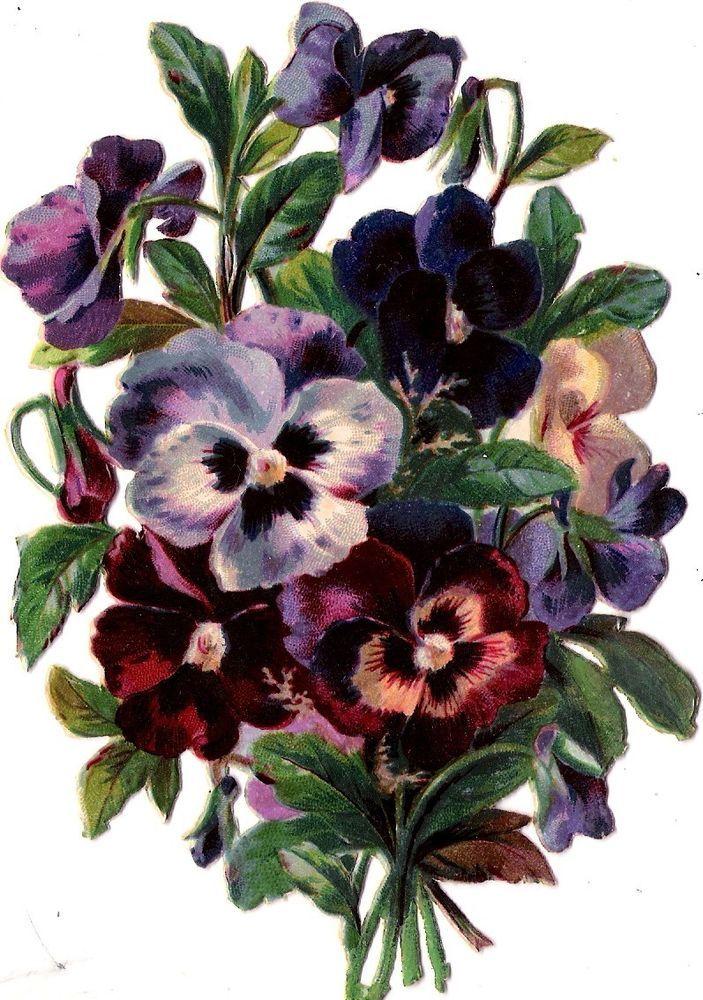 Oblaten Glanzbild scrap die cut chromo Blume 14,5 cm  Stiefmütterchen pansy