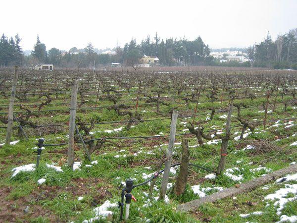 Chateau Harlaftis great greek wines