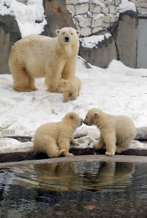 14 best images about Animals on Pinterest