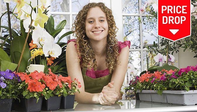 Buy Ultimate Floristry Diploma Online Course for just £12.00 Start a new career with the Ultimate Floristry Diploma Online Course      Course takes 15 hours to complete      Study in your own time and at your own pace      Once registered you have 12 months access      Learn about the biology of flowers and plants and flower arrangements      Discover the right kind of flowers for particular...