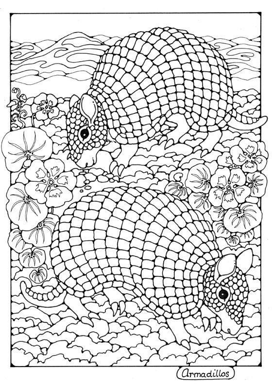 armadillos colouring page by dandi palmer adult