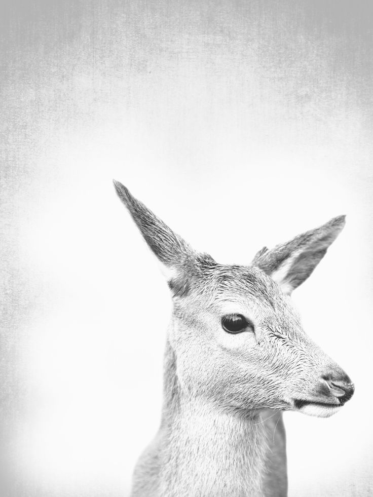 #deerprint #fawn #interiordesign #interiors #home  #art #fineart #prints   This is a fine art photograph printed on superior quality 220 gsm paper. A high quality,  Fine Art Paper offers a professional, conservation-quality natural white art print with a lightly textured ...