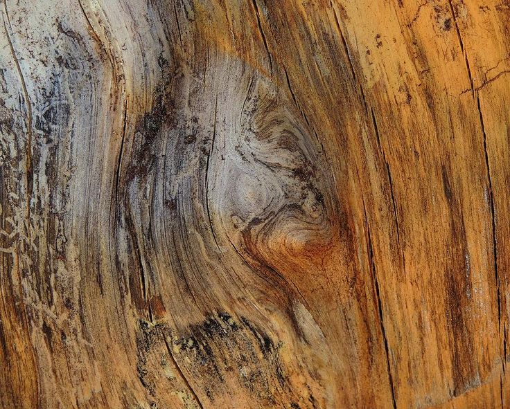 Wood Texture Photograph - Tree Stump Abstract 2 by Denise Clark