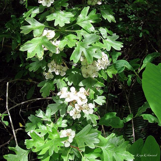 331 best best pnw native plants images on pinterest