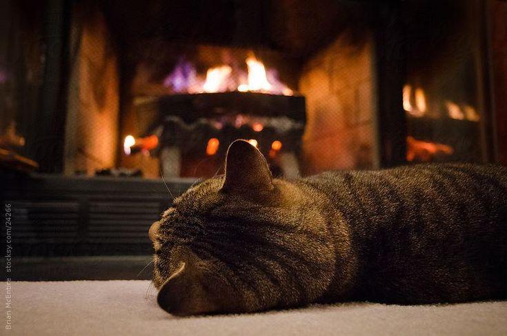 暖炉とネコ
