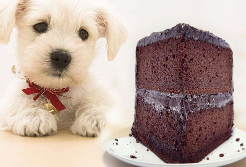 26 Foods That Could Kill Your Pets! - Likes