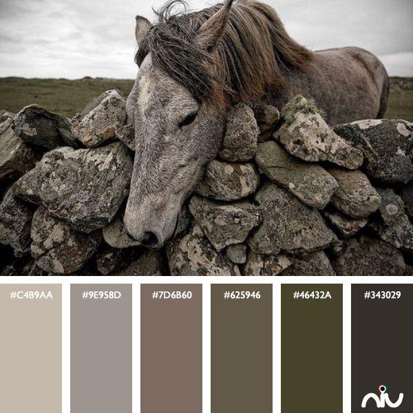 Horse Color Palette