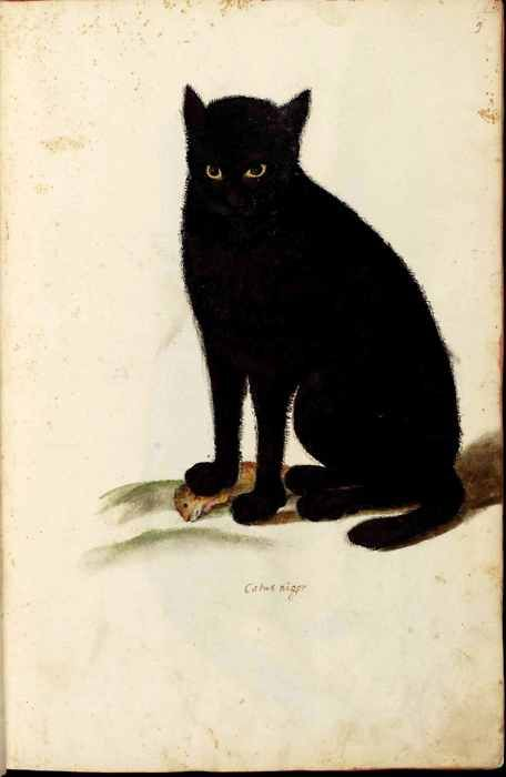 black cat with catch of day