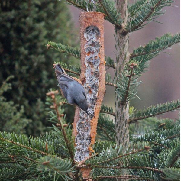 Futterholz mit Füllung aus bestem Vogelfutter und Rindertalg Das Futterholz ist eine ausBirkenholz hergestellte, nachfüllbare Wintervogelfütterung. Durch mehrere Bohrungen entsteht eine längliche Öffnung im Holz. Das Futterholz ist mit ...