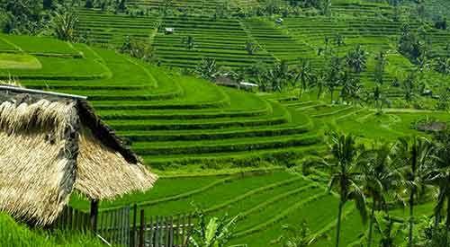 Jatiluwih Rice Terrace Bali Subak UNESCO World Heritages