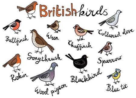 British birds by Vicki Gausden