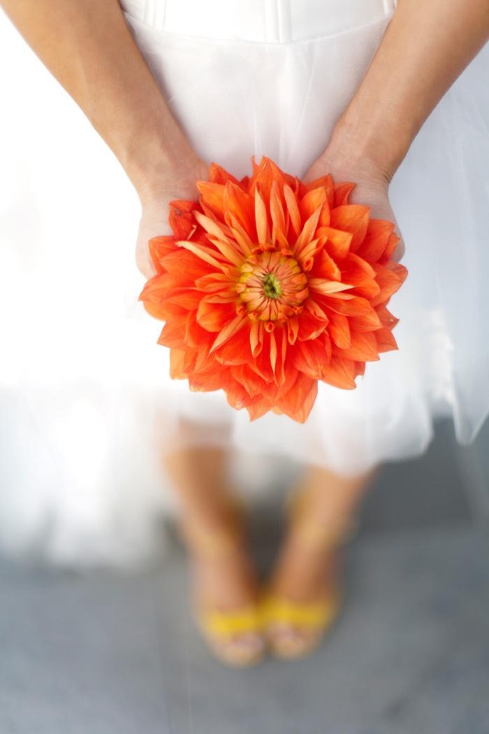 orange: Idea, Orange Flowers Bouquets, Wedding Bouquets, Dahlias Bouquets, Flowers Power, Bridal Flowers, Orange Bouquets, Orange Dahlias, Navy Orange Wedding