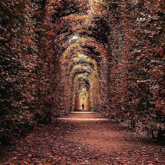 Follow @globefever foe more. Tunnel of love 🍂 Vienna, Austria. Photo by @mikecleggphoto