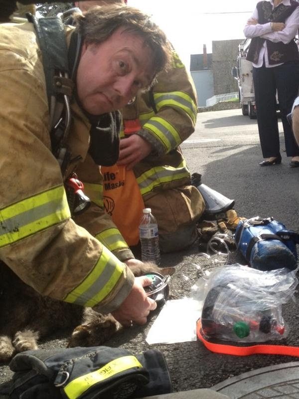 Portsmouth firefighters resuscitate 17-year-old cat during house fire (then she gets her own Facebook page) | Shared by LION