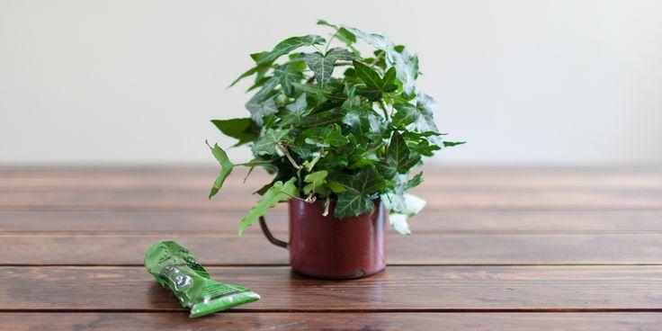 enamel mug   ivy foam   aesop   green beauty www.smallissues.ro