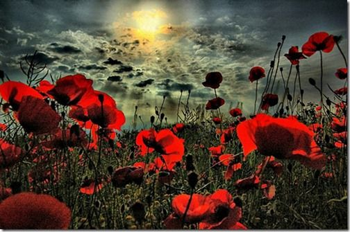 Imagens de Rosas e Flores | Fotos de Flores